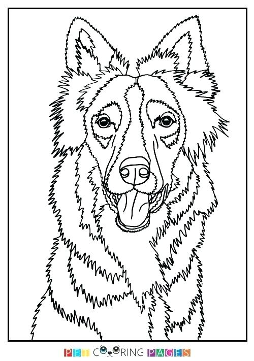 500x711 Border Collie Coloring Pages Border Collie Coloring Pages Border