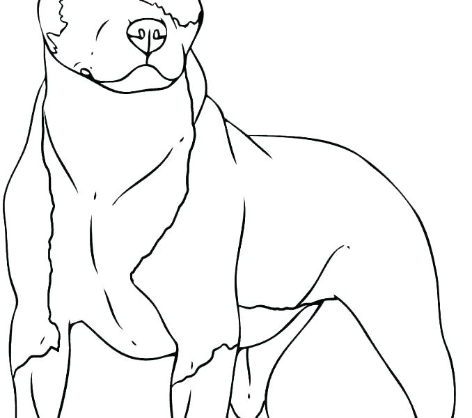 678x600 Dog With A Blog Coloring Pages Border Collie Coloring Pages Border