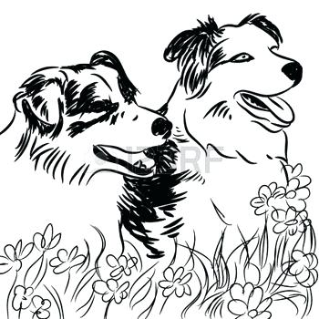 350x350 Free Border Collie Coloring Pages Kids Coloring Outline Drawing