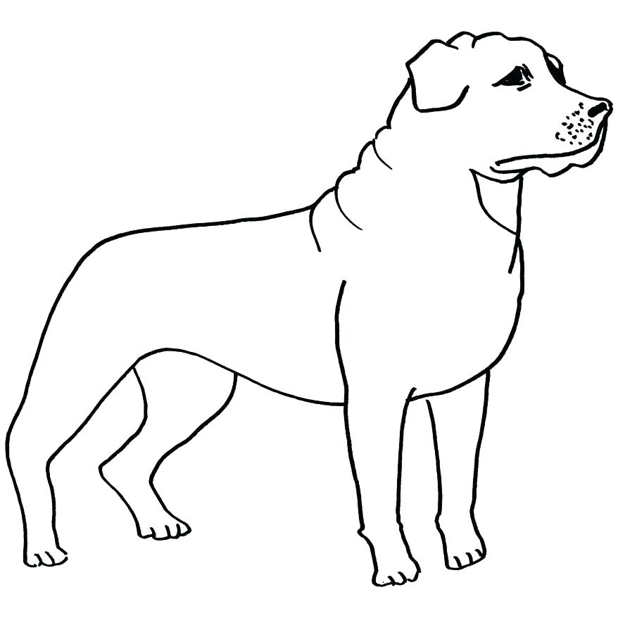 878x878 Border Collie Coloring Pages Border Collie Coloring Pages Collie