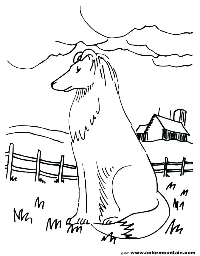 671x855 Border Collie Coloring Pages