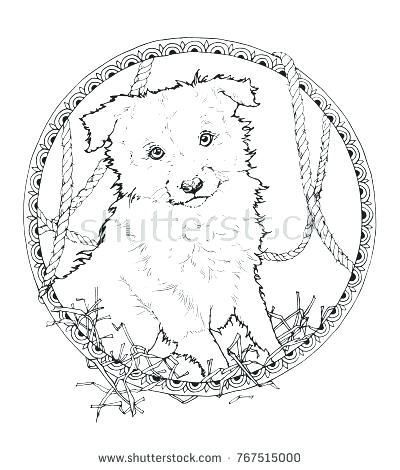 400x470 Border Collie Coloring Pages Border Collie Coloring Pages Rough