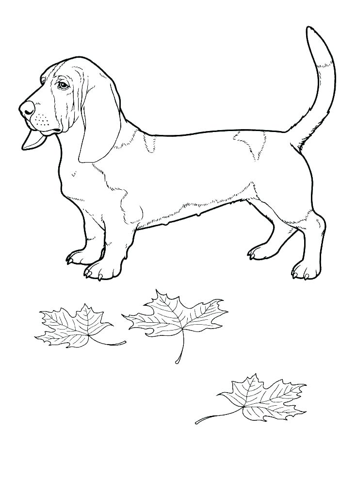 736x989 Free Border Collie Coloring Pages Animal Colorin Fuhrer Von