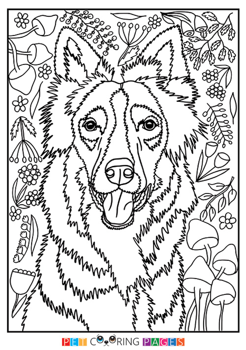 500x711 Border Collie Coloring Page Zain