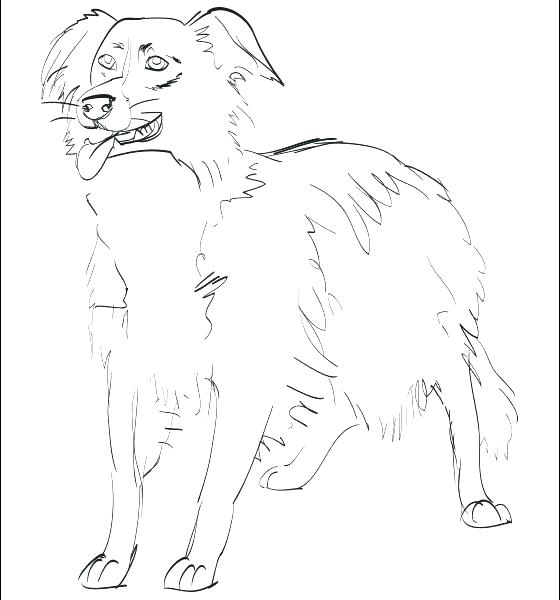 560x600 Border Collie Coloring Pages Border Collie Coloring Pages Border