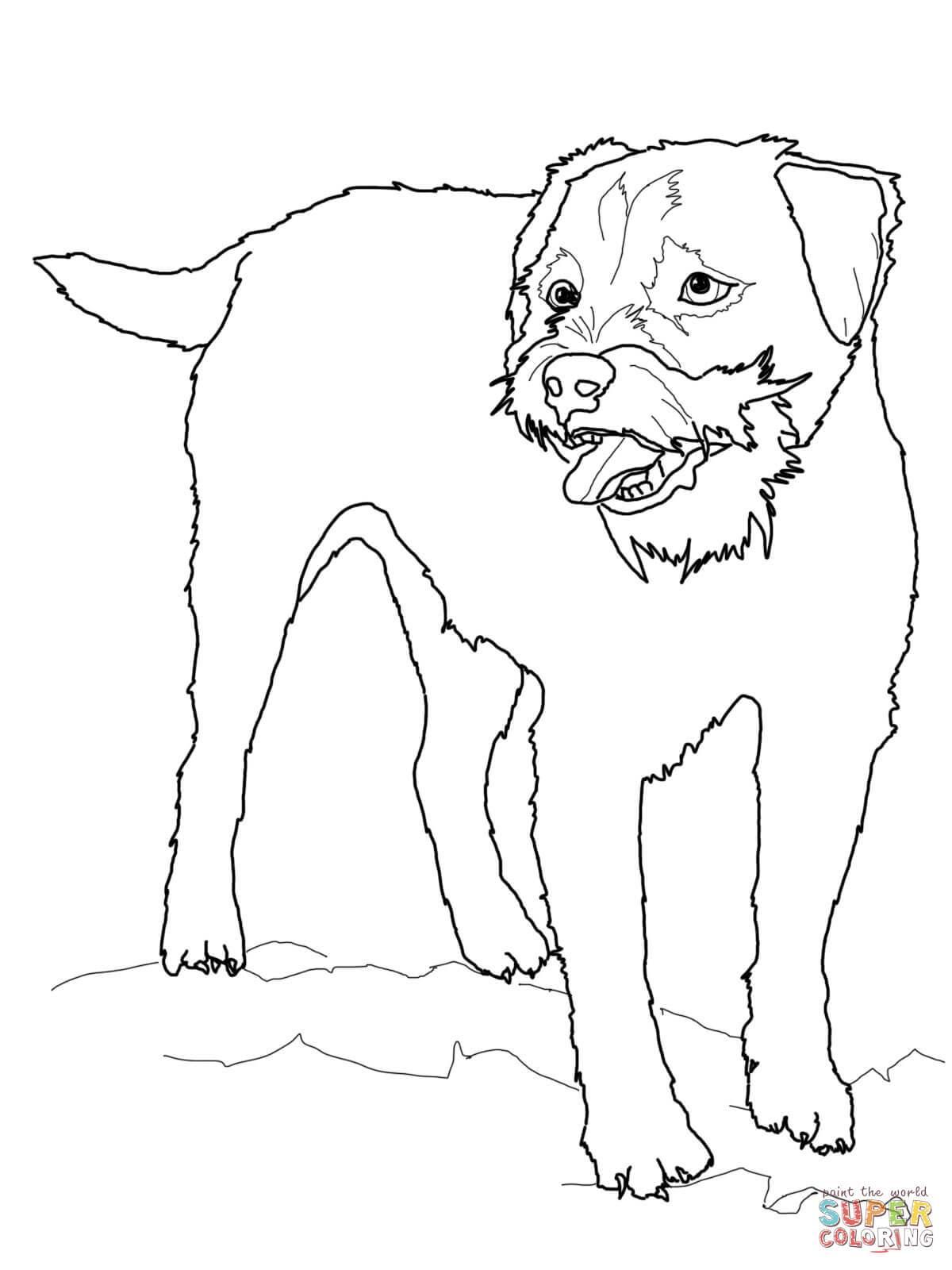 1200x1600 Inspiring Border Terrier Coloring Page Printable For Dog Bones