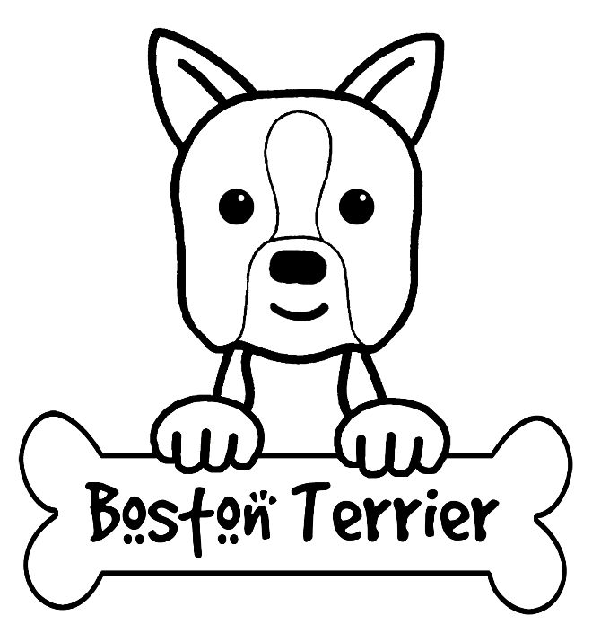 660x705 On Boston Terrier Coloring Page