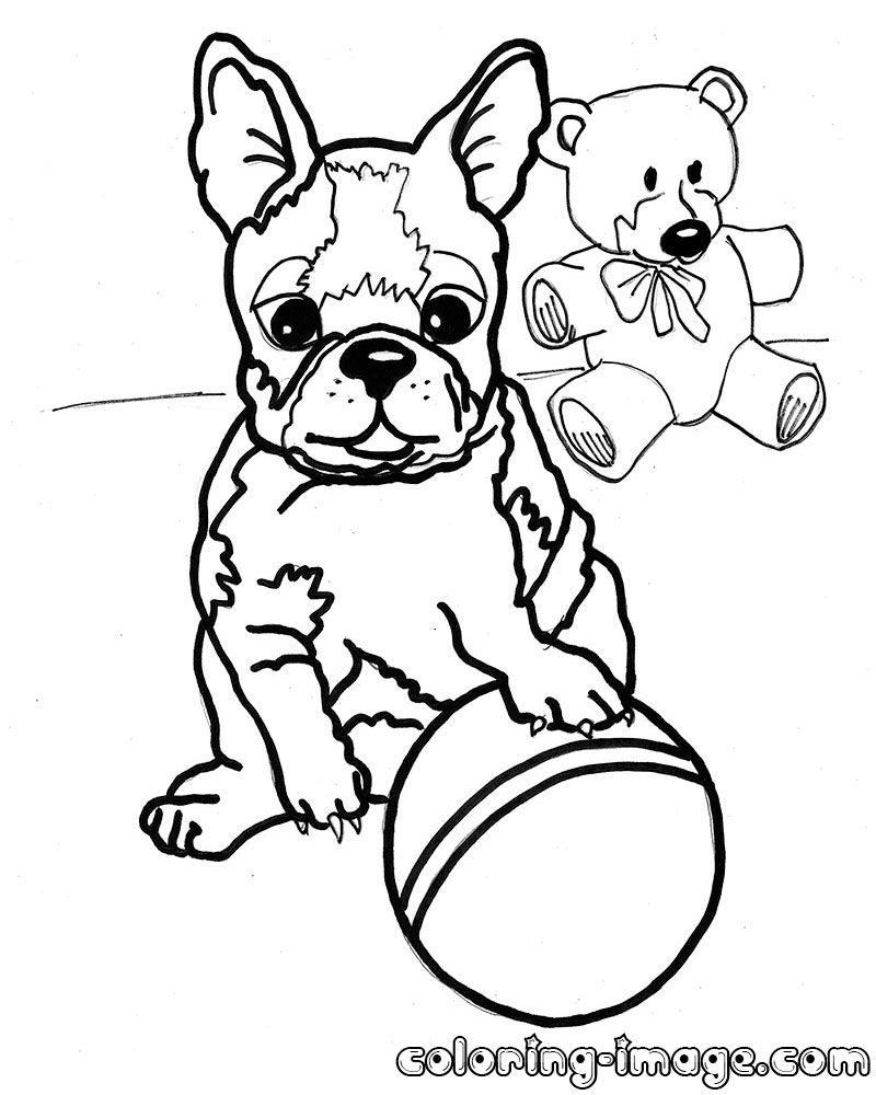 800x1000 Boston Terrier Coloring Pages Az