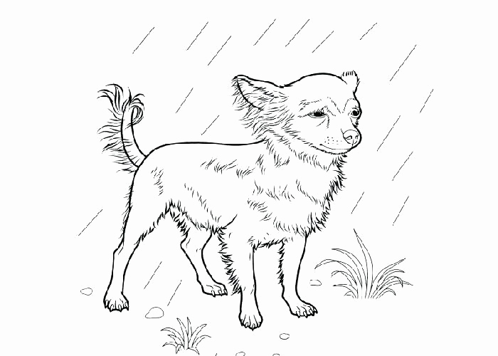 700x500 Emejing Boston Terrier Coloring Page Pictures