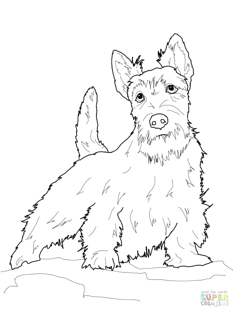 750x1000 Boston Terrier Coloring Pages