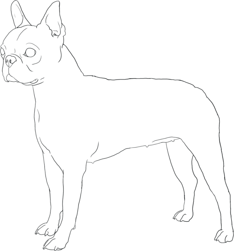 805x864 Coloring Boston Terrier Coloring Pages Free Also Boston Terrier