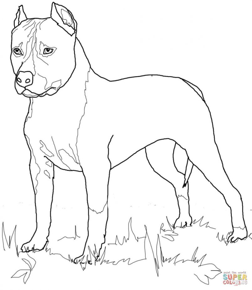 805x923 Coloring Boston Terrier Coloring Pictures Together With Boston