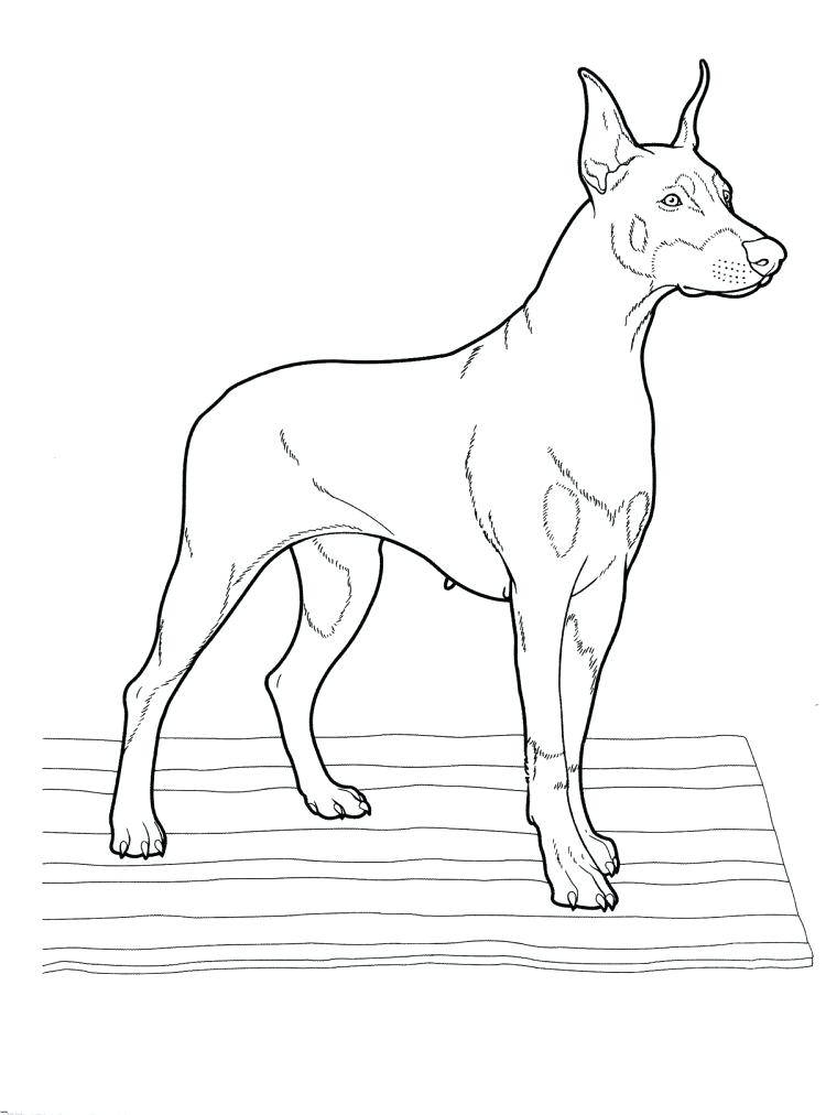 750x1012 New Boston Terrier Coloring Page For Medium Size Pages