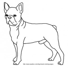 260x258 Peachy Design Ideas B Simple Boston Terrier Coloring Page