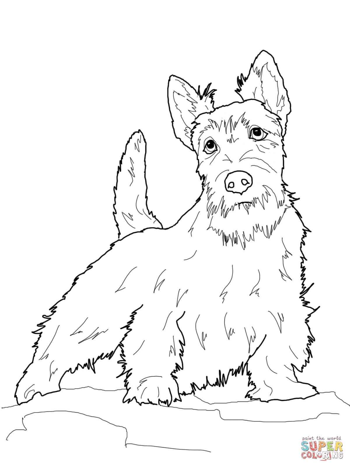 1200x1600 Scottish Terrier Coloring Pages To Print Coloring For Kids