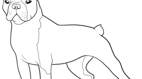 28+ [ Boston Terrier Coloring Page ] | Boston Terrier Coloring ... | 280x500