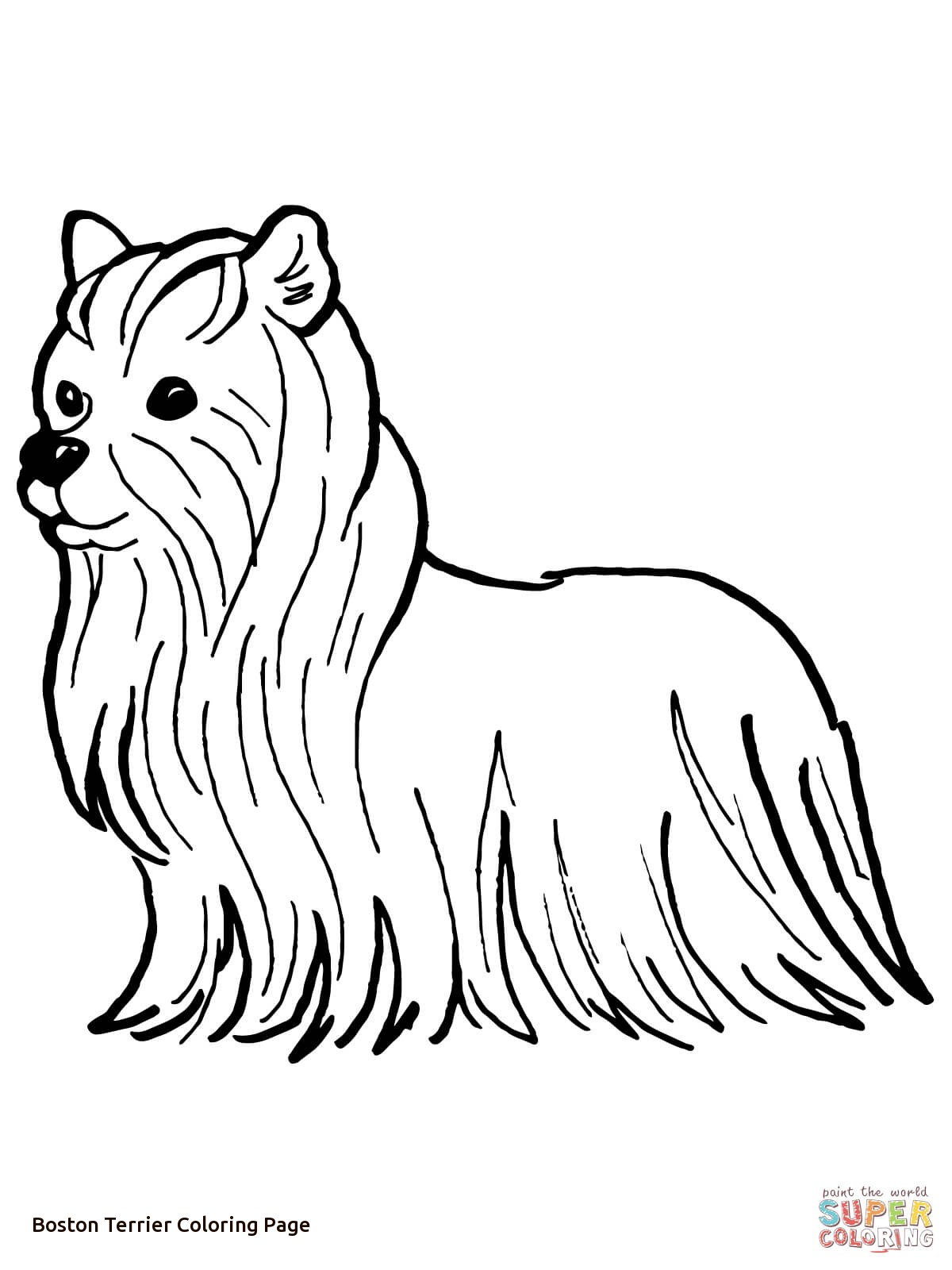 1200x1600 Yorkshire Terrier Coloring Page Of Boston Terrier Coloring Page