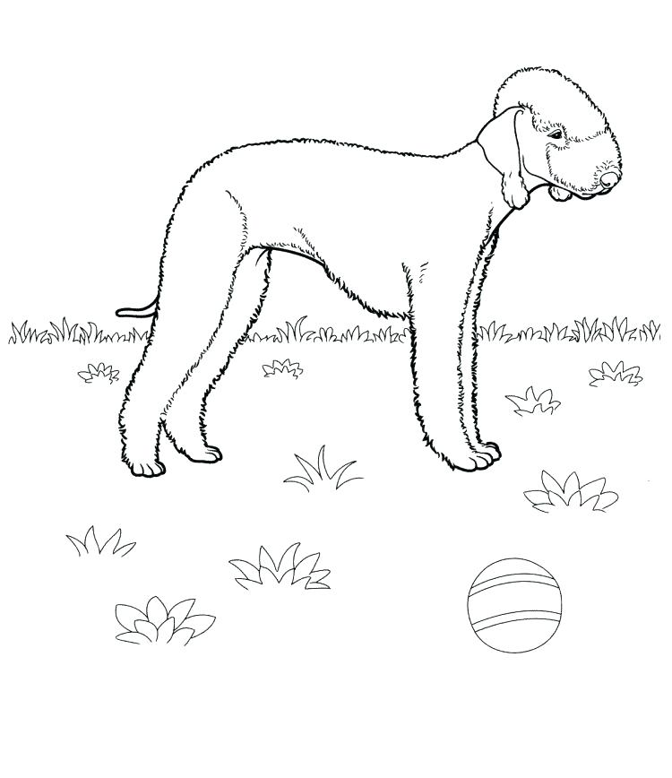 750x868 Boston Terrier Coloring Page