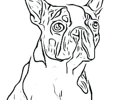 440x330 Boston Terrier Coloring Page Terrier Coloring Page Full Size