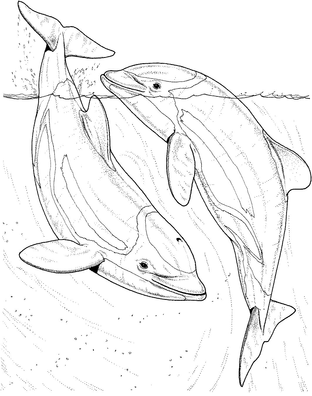 1062x1347 Dolphin Coloring Pages