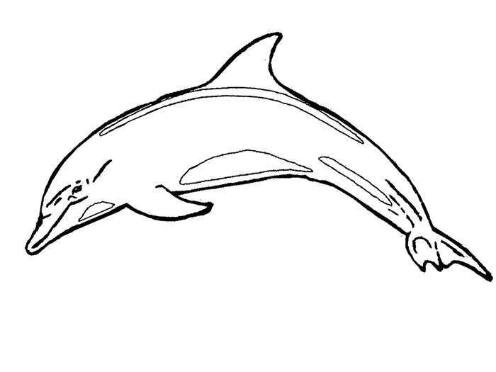 700x525 Dolphin Template