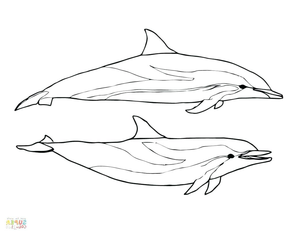 1024x816 Excellent Miami Dolphins Coloring Pages Preschool For Beatiful