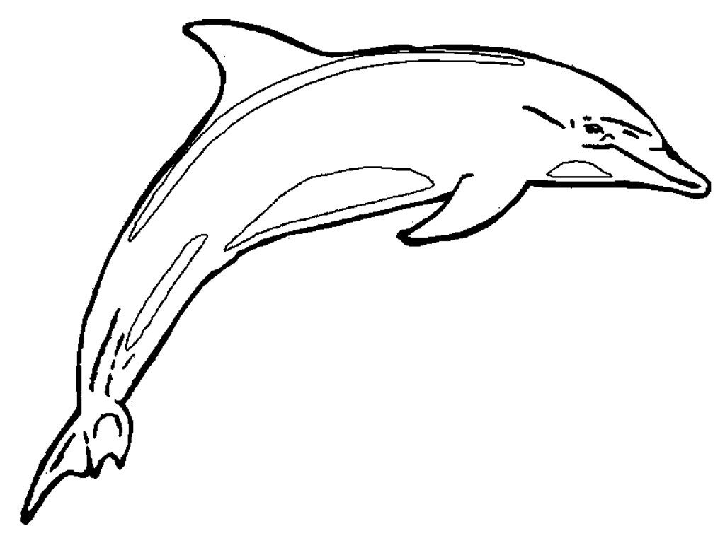 1024x768 Free Printable Dolphin Coloring Pages For Kids Free Printable