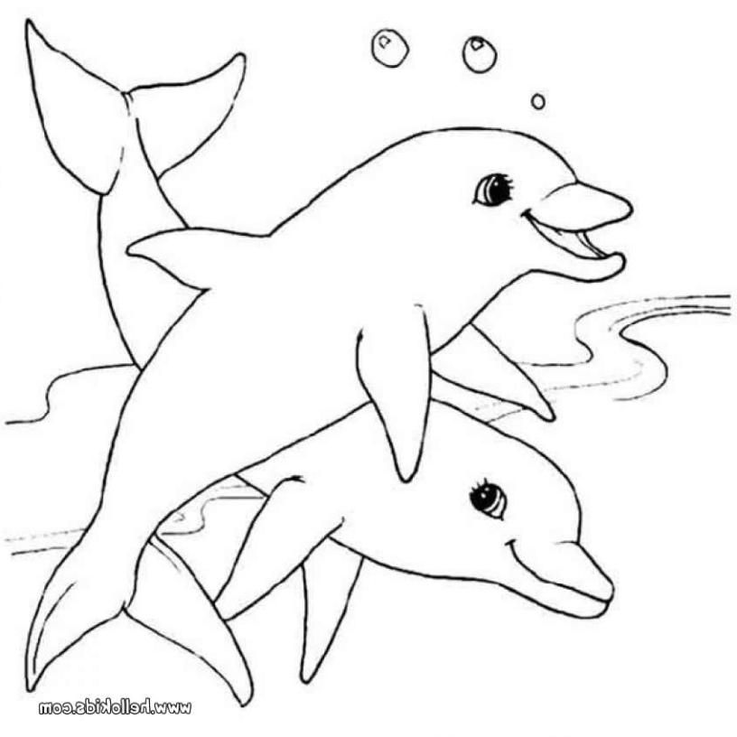 816x816 The Best Dolphin Coloring Sheets