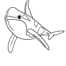 220x220 Bottlenose Dolphin Coloring Pages