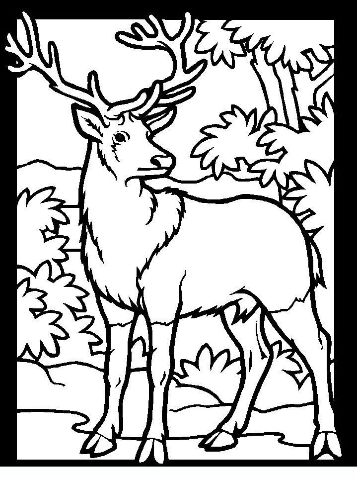 Bow Hunting Coloring Pages