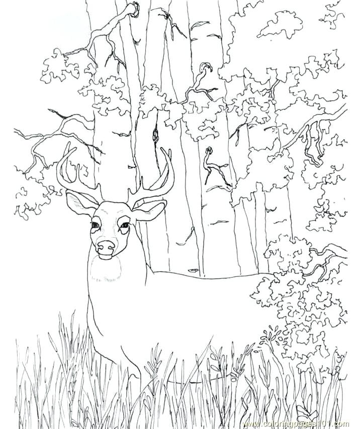 698x852 Deer Coloring Pages Page Hunting Baby Color Free Pag