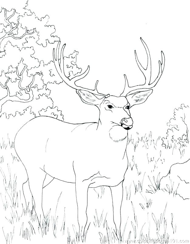 626x806 Free Deer Coloring Pages Deer Color Pages Deer Coloring Pictures