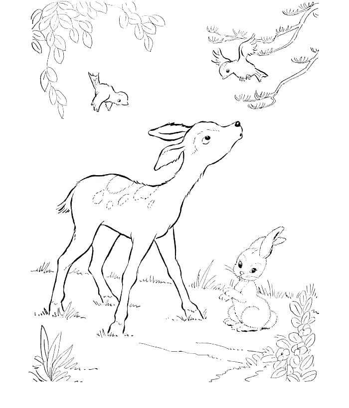 700x820 Hunting Coloring Pages Deer Color Pages Free Deer Coloring Pages
