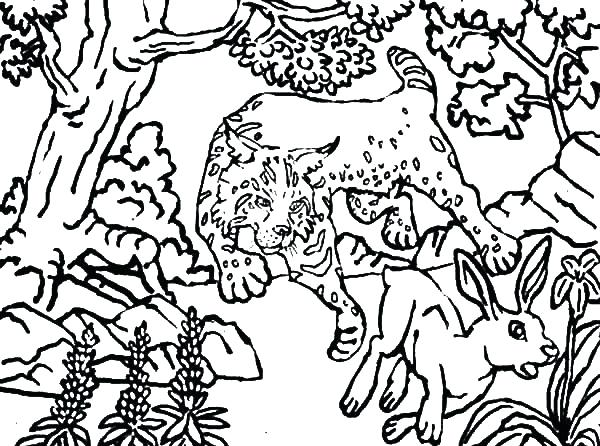 600x446 Hunting Coloring Pages Deer Hunting Coloring Pages Pig Hunting