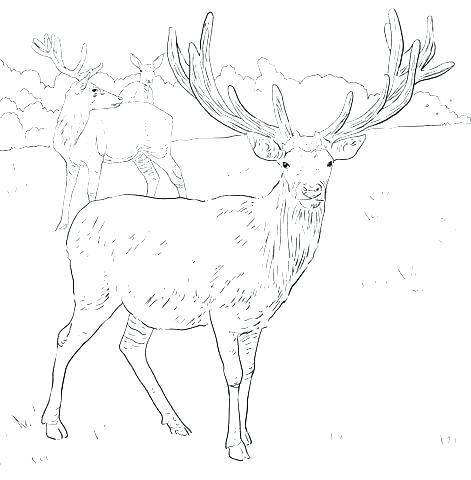 471x480 Hunting Coloring Pages Outdoor Coloring Pages Deer Hunting