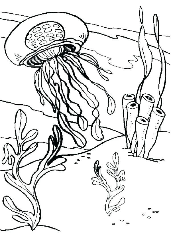 600x835 Jellyfish Coloring Page Jellyfish Coloring Pages Jellyfish