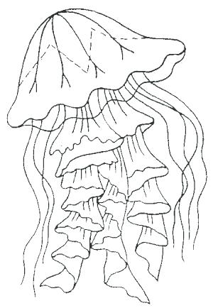 300x434 Jellyfish Coloring Page Jellyfish For Coloring Jellyfish Coloring