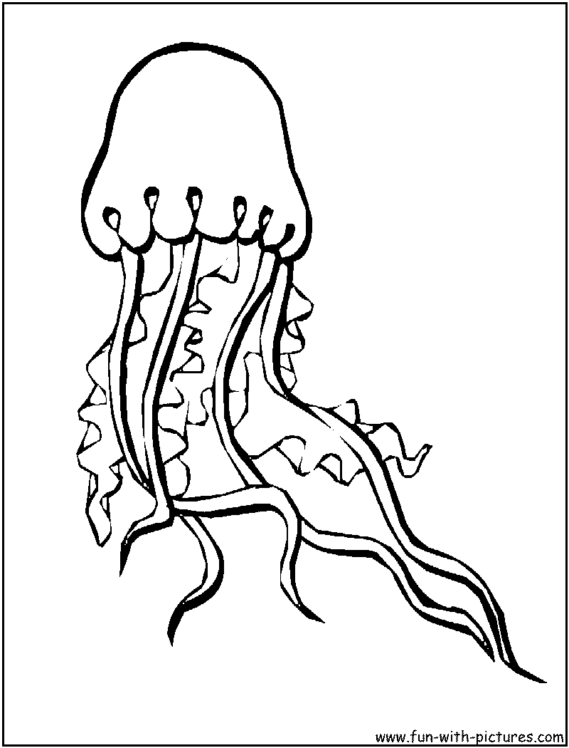 800x1050 Jellyfish Coloring Pages