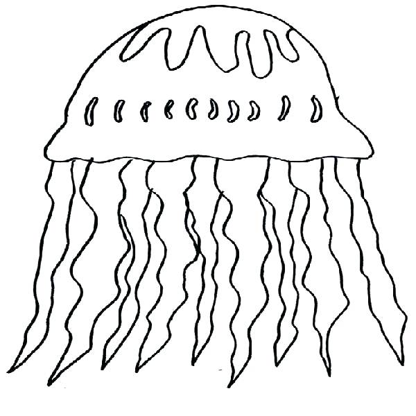 600x600 Jellyfish Coloring Pages Page Image Images Coloring Pages Box