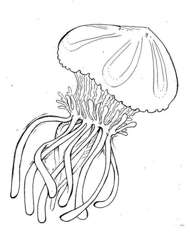 600x758 Box Jellyfish Coloring Page