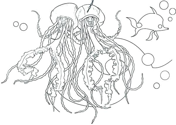 600x428 Jellyfish Coloring Pages For Adults