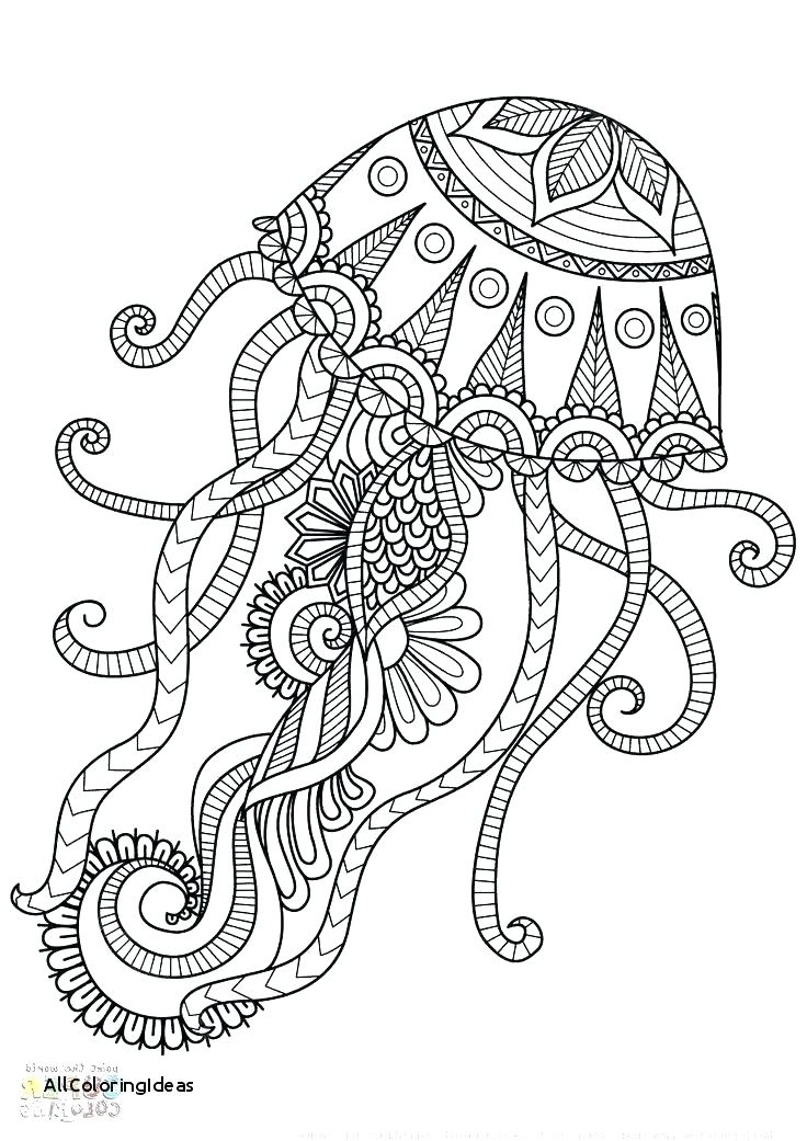 736x1041 Jellyfish Coloring Pages