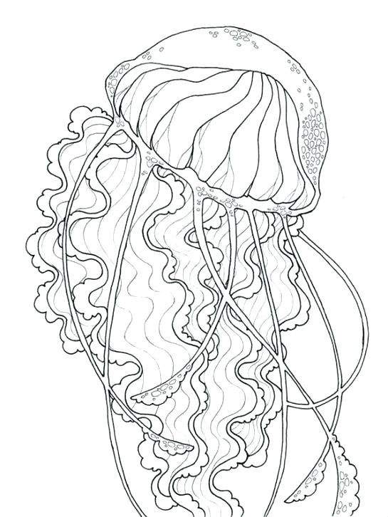 545x726 Jelly Fish Coloring Page Box Jellyfish Coloring Pages To Print