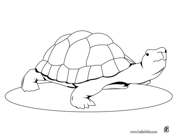 620x480 Cute Turtle Coloring Page You Can Print Out This Coloring Page