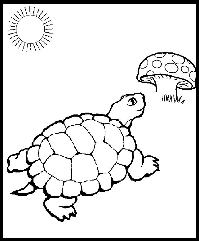 642x777 Eastern Box Turtle Coloring Page Printables Box