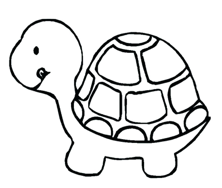 921x780 Eastern Box Turtle Coloring Page Free Printable Coloring Pages