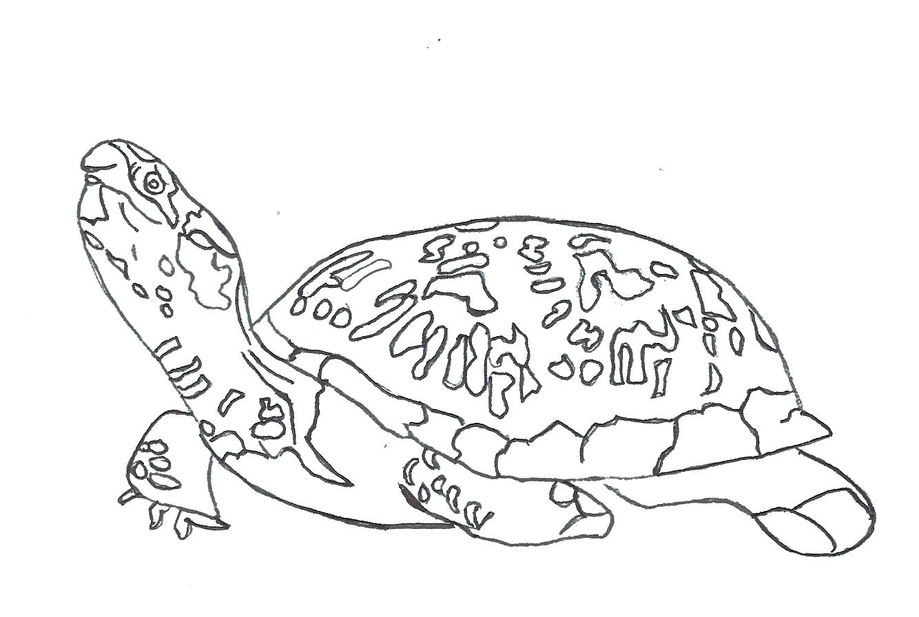 1334x896 New Zachr Page Monster Truck Coloring Pages Sea Turtle Free