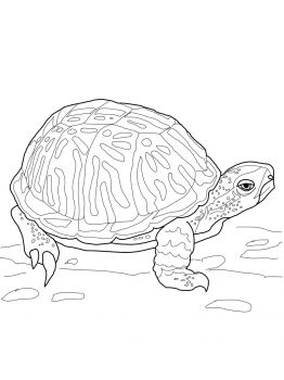 262x350 Ornate Box Turtle Animal Colouring Pages Box