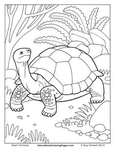 236x305 Ornate Box Turtle Coloring Page Free Printable Coloring Pages