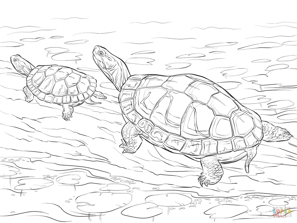 1200x900 Superior Realistic Turtle Coloring Pages Cute Eastern Box Page